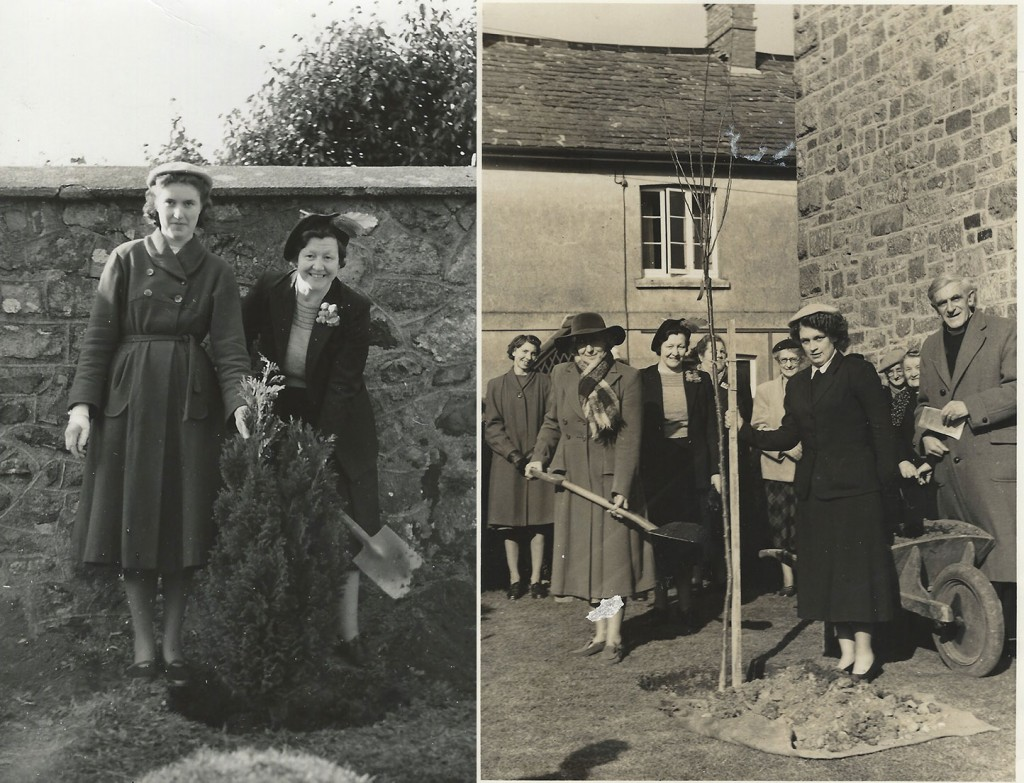Sticklepath Tree Planinng 1953 to commemorate the Coronation